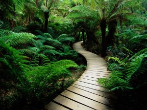 Walkway_to_peace
