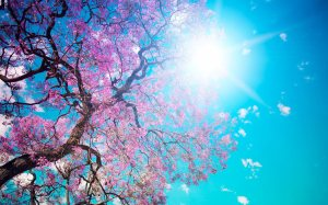 pink-hd-abstract-spring-place-599222