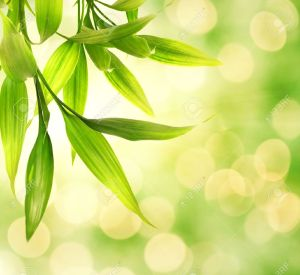 3816206-Bamboo-leaves-over-abstract-blurred-background-Stock-Photo-buddhism-bamboo